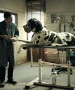 dogman01
